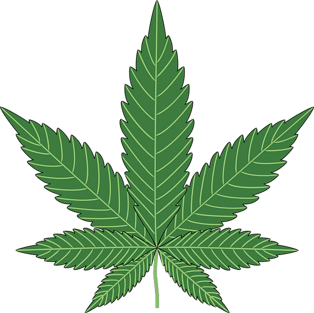 Will cannabis oil help to calm spasticity in SCI patients?